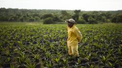 Una palma aceitera sostenible sí es posible