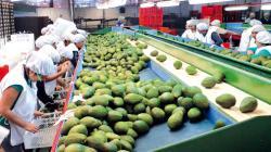 """Universidad de Piura realizará seminario """"Bases del Milagro Agroexportador Peruano"""""""