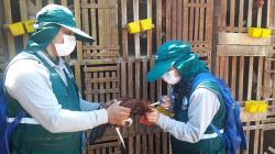 Vacunaron a 281.612 aves contra enfermedad de Newcastle en Ica en 2019