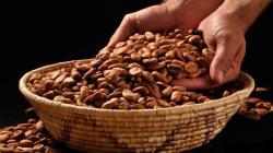 Validan visión para el cacao y chocolate peruano al 2030