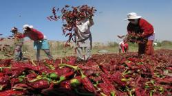 Valor bruto de la producción agropecuaria creció en 2.1% en el primer semestre del año