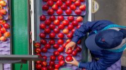 Verfrut supera su récord de exportaciones de frutas en la campaña 2020/2021