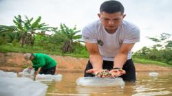 Vraem: proyecto de producción de peces amazónicos beneficia a 597 familias