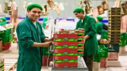 Westfalia Fruit Perú exportará 34 mil toneladas de palta en la actual campaña