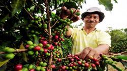 Ya hay más de 500 muestras inscritas paga el concurso de cafés especiales Expo-Café Cajamarca 2021