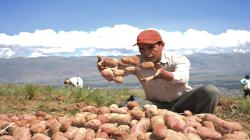Yara lanza campaña RicaPapa para elevar la productividad de los productores con un menor impacto ambiental