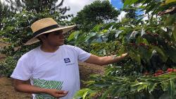 """Yara lanzará """"NuestroCafé"""" para incrementar rendimiento productivo y calidad de taza"""