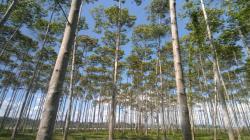 """Zonificación forestal de San Martín responde a política de Estado para hacer frente al cambio climático"""