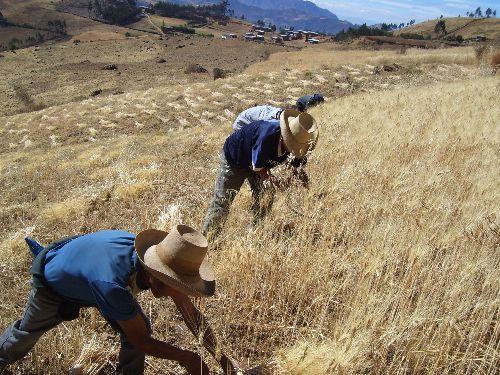 PEQUEÑOS AGRICULTORES DESARROLLAN PLANES DE NEGOCIOS POR S/. 326 MILLONES