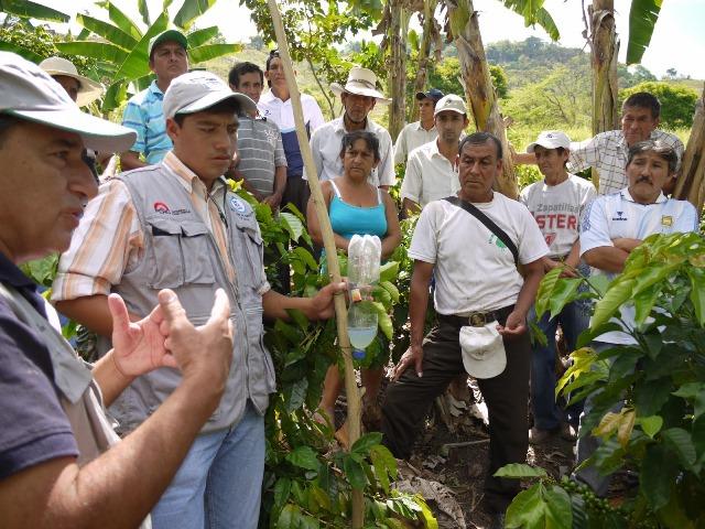SAN MARTÍN: RESTAURAN SUELOS PARA MEJORAR PRODUCCIÓN DEL CAFÉ