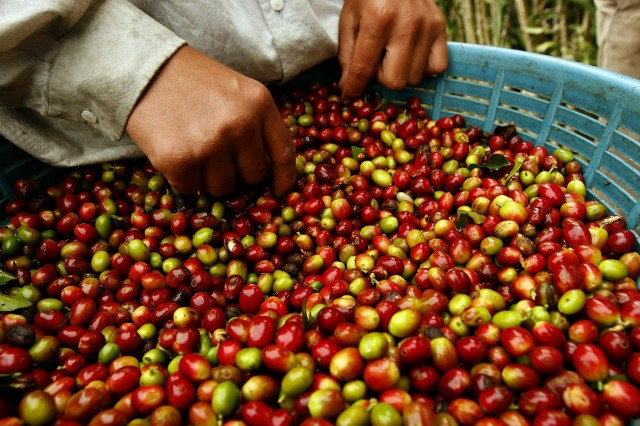 EXPORTACIONES DE CAFÉ CAEN 50% EN EL PRIMER TRIMESTRE DE 2015