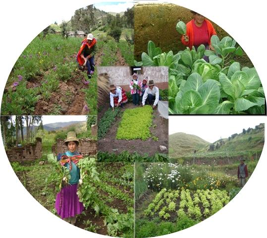 Suelos sanos son base de producci n alimentaria for Importancia de los suelos