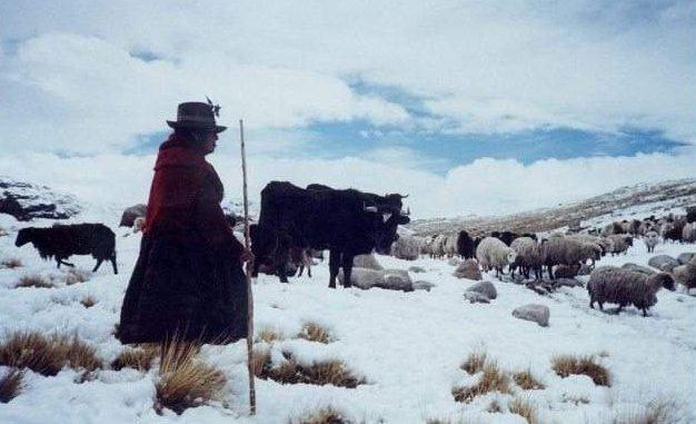 HELADAS SE INTENSIFICARÁN Y AFECTARÁ A SIETE REGIONESEN LA SIERRA SUR