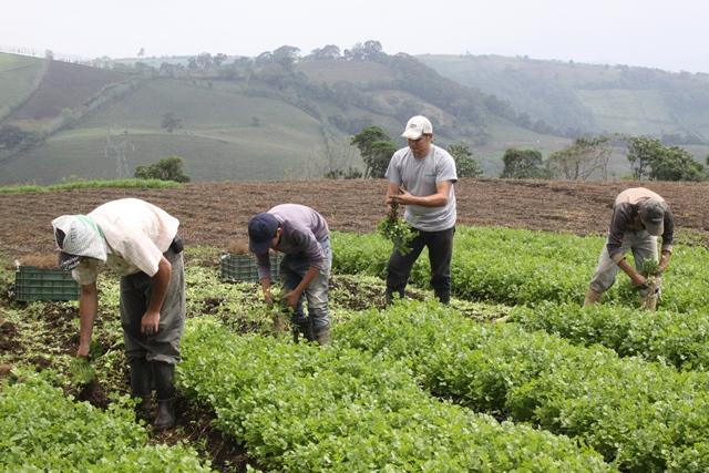 AGRICULTURA FAMILIAR ES CLAVE CONTRA EL HAMBRE EN LATINOAMÉRICA