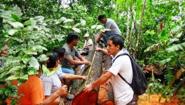 UCAYALI: OSINFOR CAPACITA A COMUNIDADES INDÍGENAS SOBRE RECURSOS FORESTALES