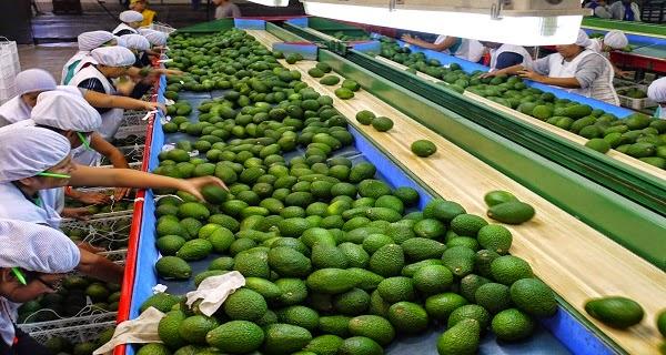 MINAGRI POSICIONA PRODUCTOS AGRÍCOLAS EN IMPORTANTES MERCADOS DE ASIA