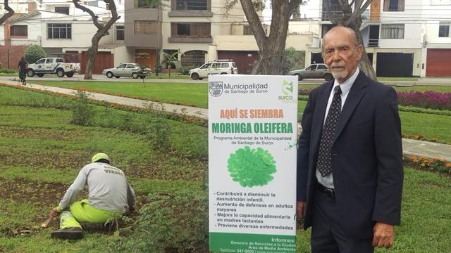 PLANTA CON ALTO CONTENIDO PROTÉICO ES SEMBRADA EN PARQUES DE SURCO
