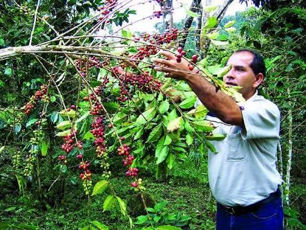 CAFETALEROS DE CUSCO Y PUNO RECLAMAN POR DESATENCIÓN DEL ESTADO