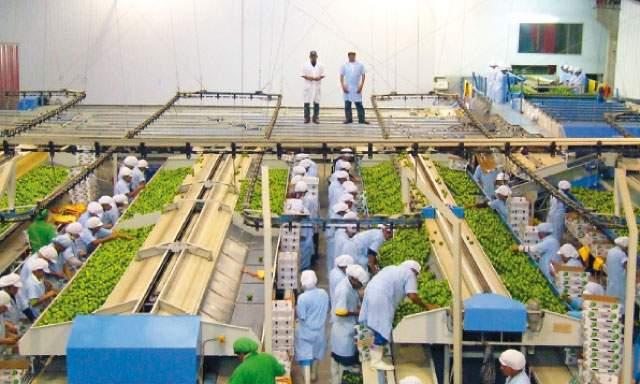 AGROEXPORTACIONES SIGUEN DANDO BATALLA