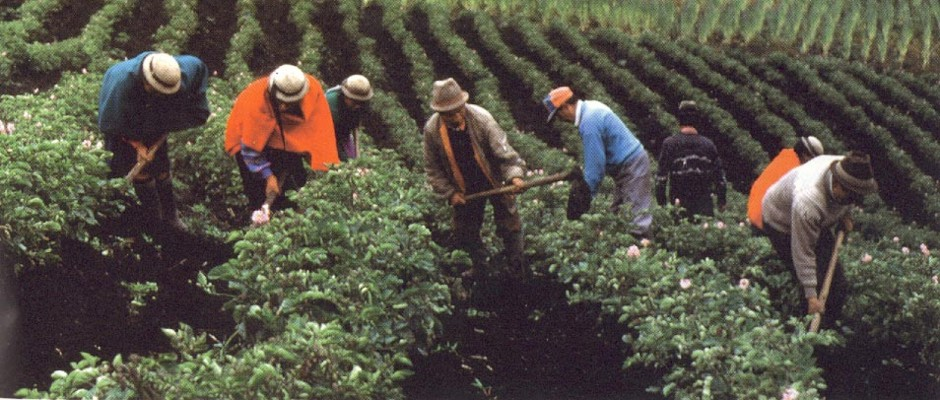 AGRICULTURA ES UNA ACTIVIDAD CON ALTO POTENCIAL DE PRODUCTIVIDAD