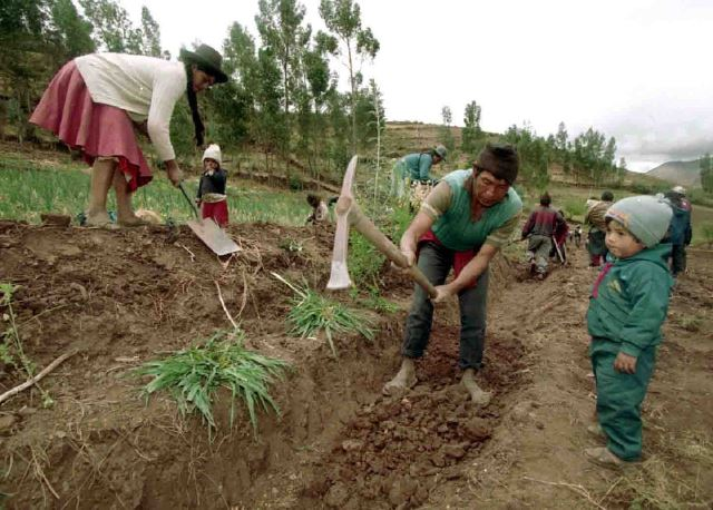"""""""CULTIVOS NECESITAN SER ASEGURADOS DEBIDO A EFECTOS CLIMÁTICOS"""""""