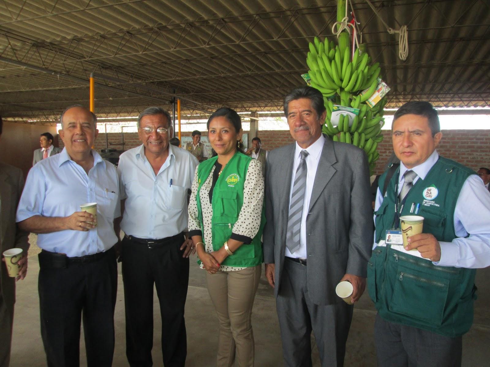 SENASA Y GORE PIURA MEJORARÁN CADENA PRODUCTIVA DE BANANO ORGÁNICO