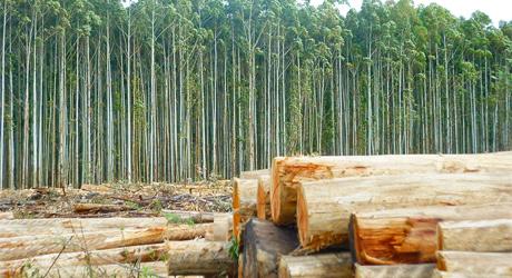 AGROBANCO PROMUEVE EL DESARROLLO FORESTAL EN PERÚ
