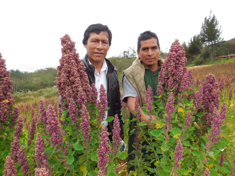 DANPER DESARROLLA CADENAS PRODUCTIVAS CON MÁS DE MIL AGRICULTORES DE ZONAS ALTOANDINAS
