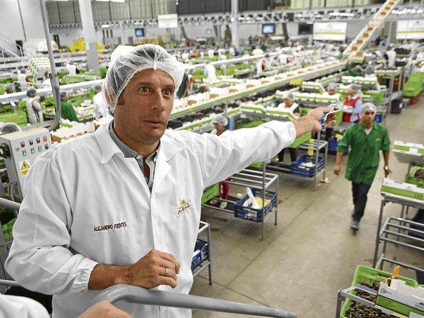 Agrícola Don Ricardo proyecta crecer 15% en facturación este año