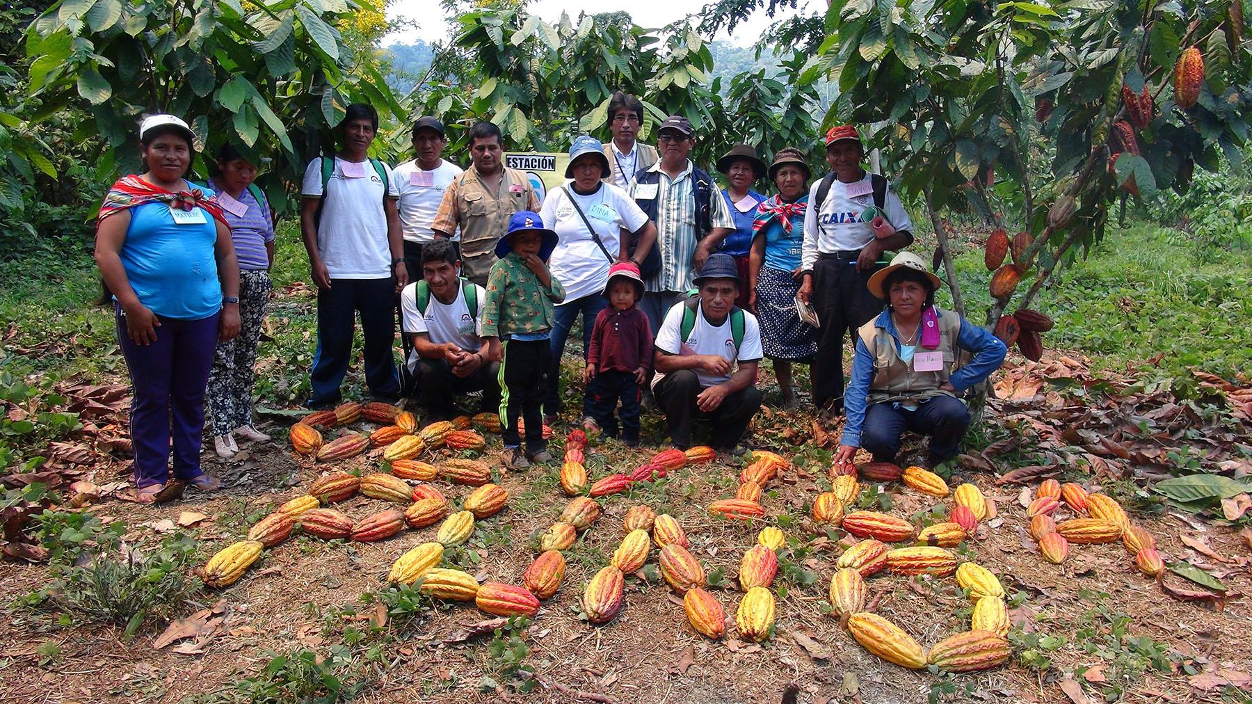 Agricultores de cacao fortalecieron capacidades en cultivo de cacao en Puno