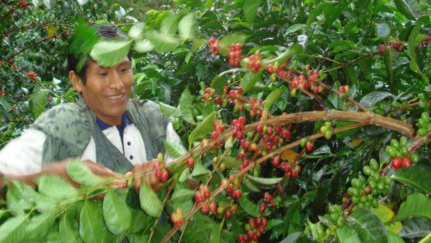 12 departamentos incrementaron su producción de café en julio
