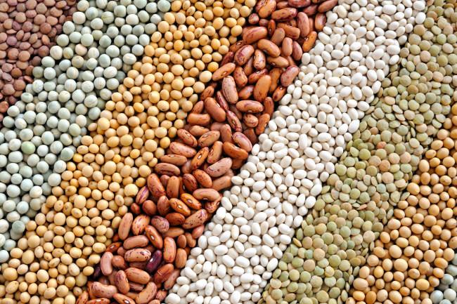 Lanzan Concurso Nacional de Ensayo sobre la importancia de las legumbres en la economía del país