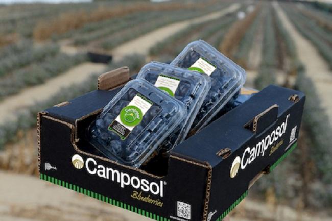 Camposol proyecta mejora de hasta 30% en precios del arándano peruano cuando ingrese al mercado chi...