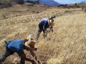 Apurímac: 11 proyectos de irrigación fortalecerán sector agropecuario