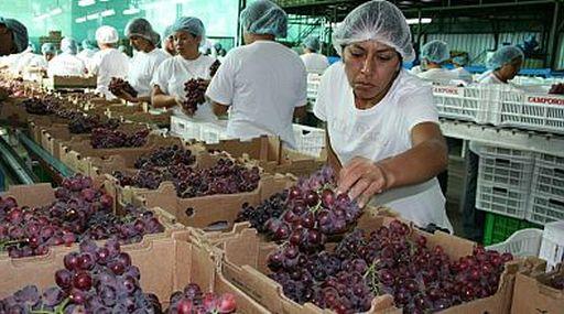 Perú promociona su uva en Corea del Sur