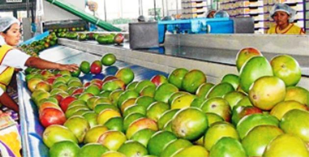 Exportaciones peruanas de  mangos frescos crecerían entre 10% y 15% en campaña 2016/2017