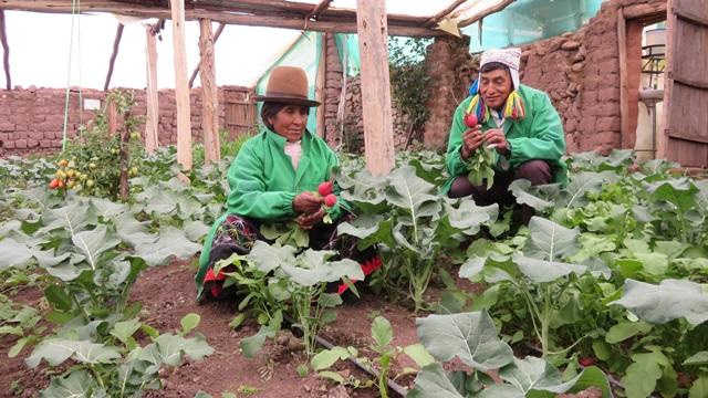 Senasa atiende a más de 2.3 millones de familias que viven de la agricultura