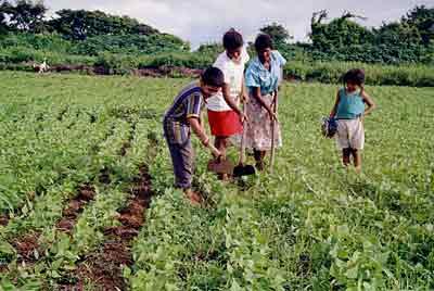 Desde del censo agropecuario del 2012, la mirada del Minagri está en el desarrollo de la sierra y l...