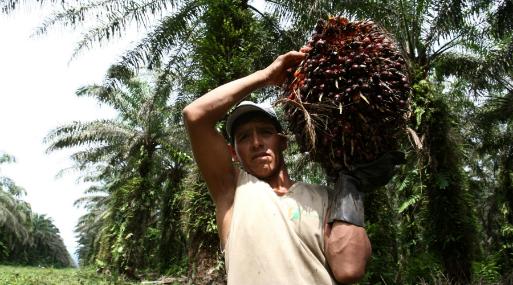 Junpalma: No se puede culpar a la industria de la palma aceitera de la deforestación en la selva