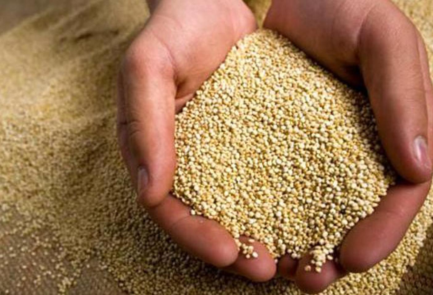 Exportaciones peruanas de superalimentos crecerían 4% este año