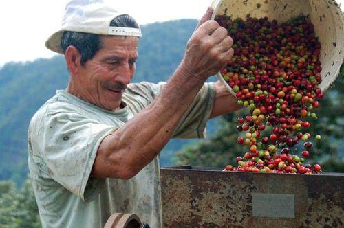 Junta Nacional del Café pide al Gobierno ampliar  plazos de pago de créditos adquiridos por cafeta...