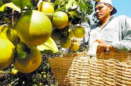 México es el quinto productor mundial de naranjas