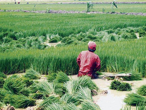 Lambayeque: Gerencia Regional de Agricultura elabora plan de contingencia por S/ 37 millones