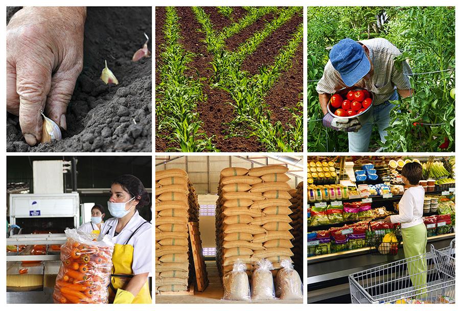Producción de alimentos en el mundo debe aumentar 60% al 2050