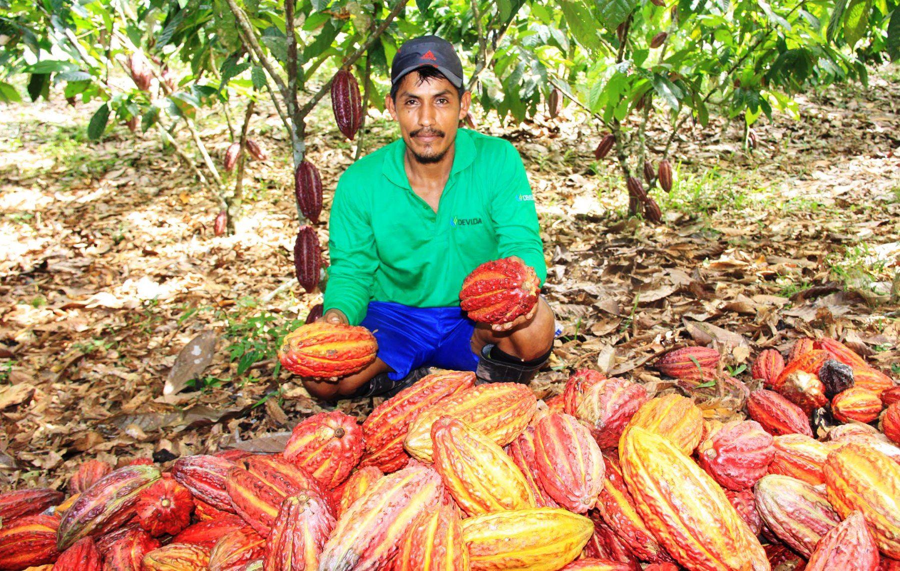 Producción nacional de cacao habría alcanzado alrededor de 90 mil toneladas el 2016