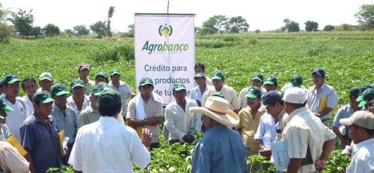 Agrobanco capacitará a pequeños productores para que ordenen sus cuentas e ingresen al sistema fin...