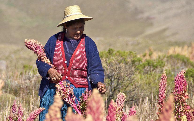 Gobierno Regional de Puno niega presupuesto para Congreso Mundial de la Quinua