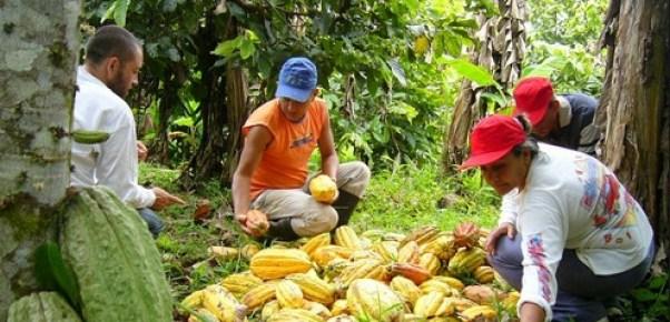 Cacaoteros de Ucayali y San Martín fueron capacitados