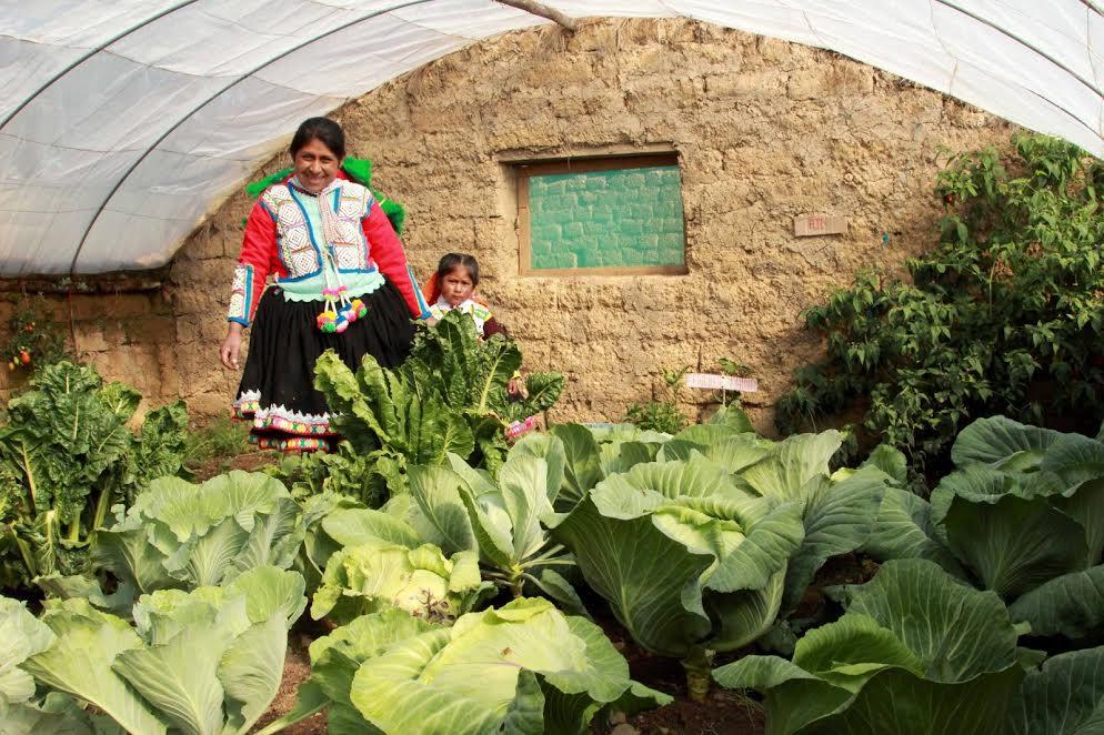 Fitotoldos mejoran la alimentación de pobladores de Huancavelica