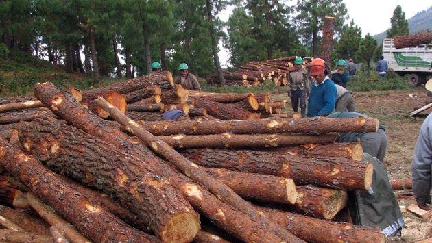 Gobierno debe trabajar con privados para desarrollar sector forestal